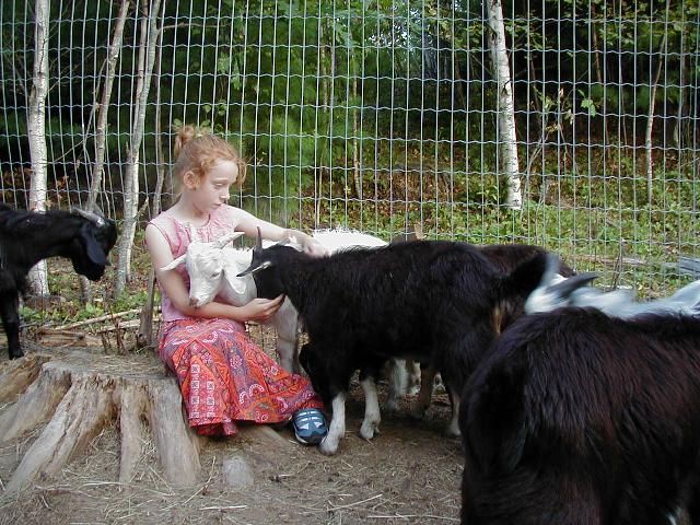 Ivy and Goats